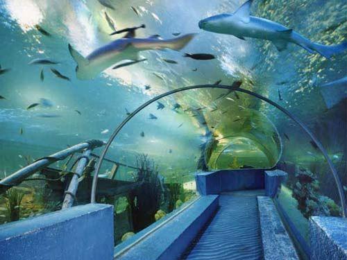 海豚表演馆,海洋科普馆,热带雨林馆,海底隧道四馆及入场区,科普区