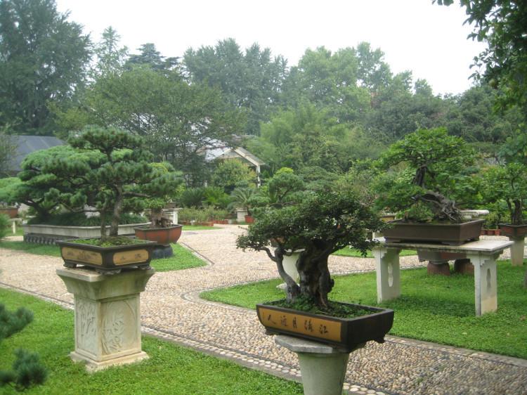"""苍松,翠柏,嫩柳,淡竹,构成""""翠洲云树""""特色.&nbsp"""
