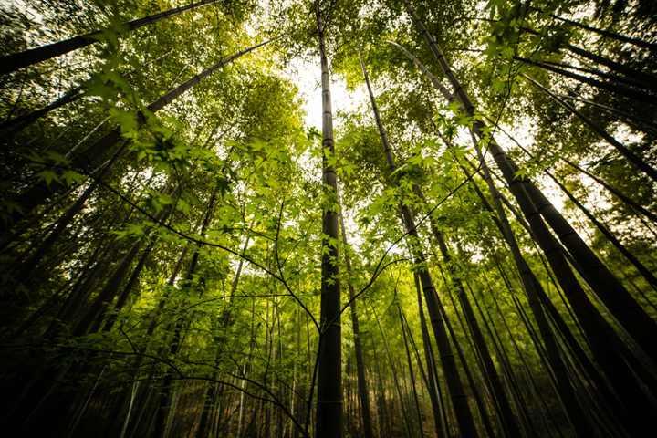 南山竹海环境宜人,一走进竹海,扑面而来的是满眼苍翠欲滴的绿色