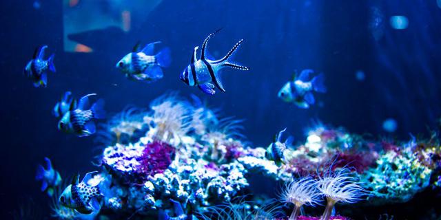 人鱼童话王国 海昌极地海洋世界