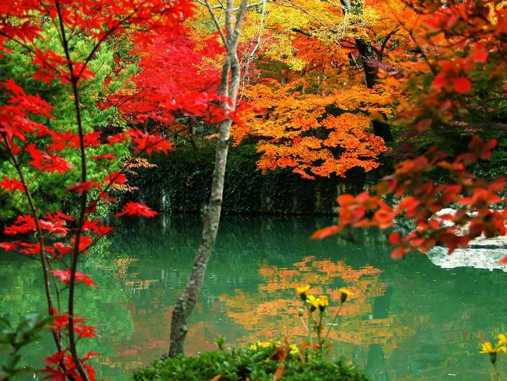 秋天去哪里旅游好南京栖霞山  栖霞山位于南京城东北22公里处的栖霞镇,有东、西、中三峰,山中多枫树、乌柏树,偶尔还夹杂着几株青翠欲滴的松柏,显得别具韵味。山上枫林、乌桕林连绵成片,栖霞丹枫是金陵十景之一。   栖霞山上枫林连绵一片,霜降时节,满山红叶,铺天盖地,红似烈火,美不胜收,成为南京著名胜景之一。东峰的太虚亭,是栖霞山观赏红叶最佳处,游至亭中小坐片刻,倚栏观赏那满山漫坡,如霞如锦的红叶奇景,别有一番情趣。 秋天去哪里旅游好元阳梯田  云南省元阳县地处哀牢山南部,这里聚居着哈尼、彝、傣、苗、