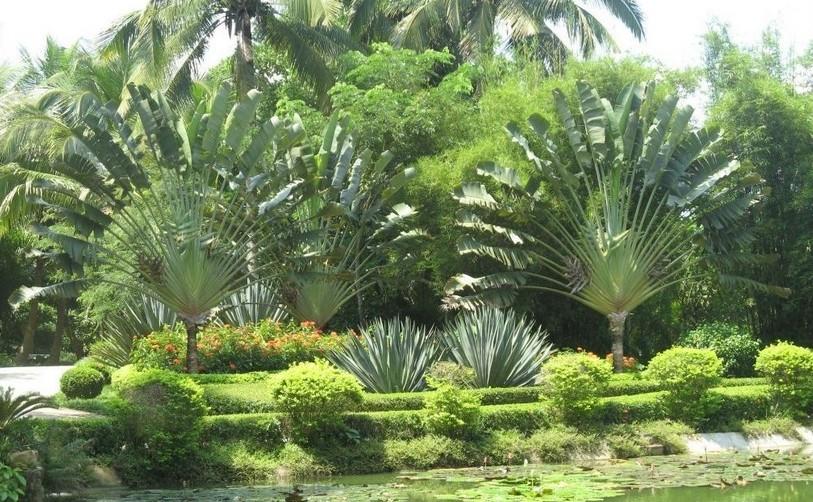 万宁好玩的地方推荐 兴隆热带植物园,位于海南省著名风景旅游区兴隆