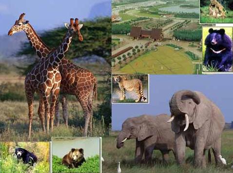 上海野生动物园在哪里