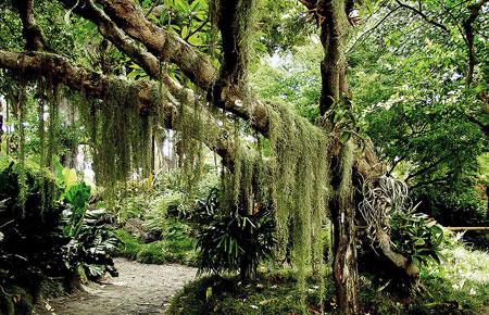 壁纸 风景 森林 树 桌面 榕树 450_290